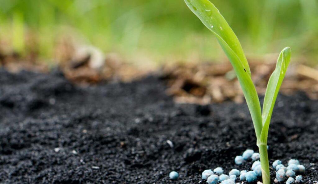 Garden plant with fertilizers