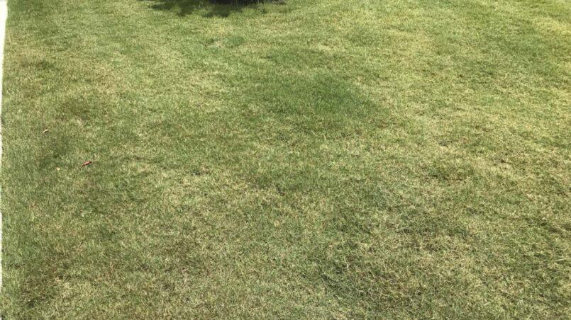 Grass after ammonia