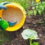 Lawn fertilizers for vegetable garden