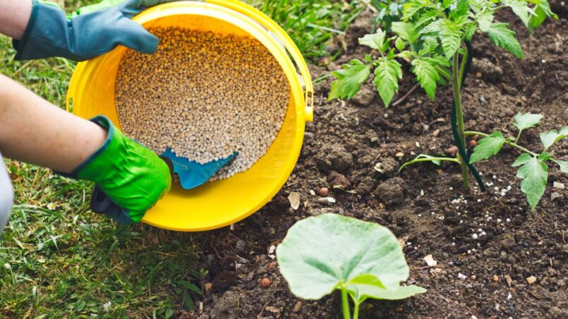 Lawn fertilizers for vegetable garden